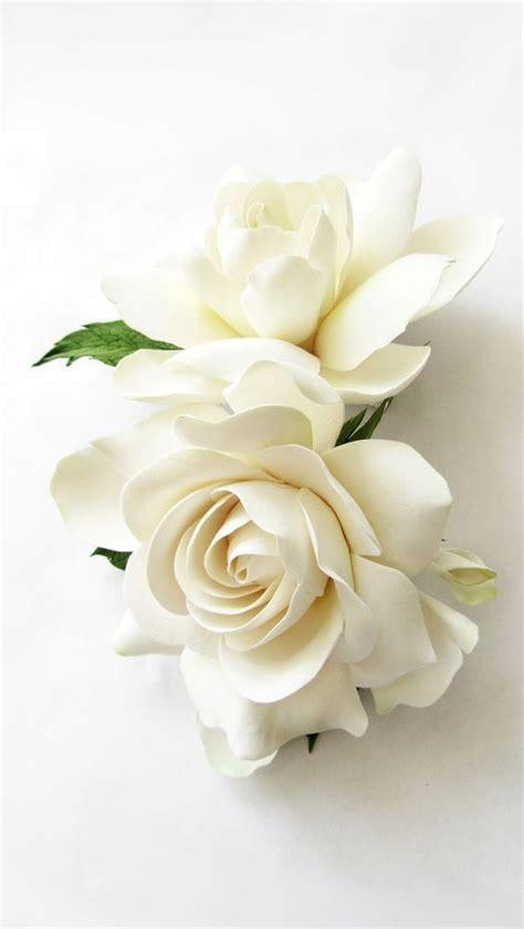 high c gardenias 198 best high c supply images on pinterest bloom