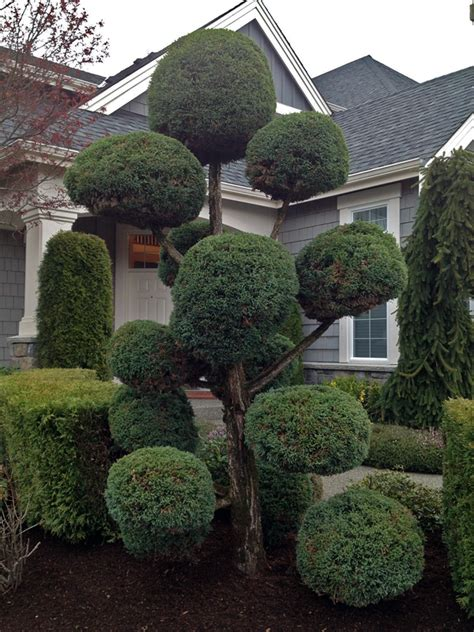 Landscape Pictures With Balls O Trees Persnickety Lawn And Landscaping