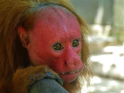 imagenes de animales feos del mundo imagenes de monos animados feos imagui