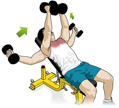 incline bench dumbbell fly workoutpedia chest