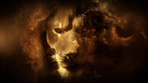 wallpaper hd of lion wallpapers box abstract lion hd wallpapers backgrounds