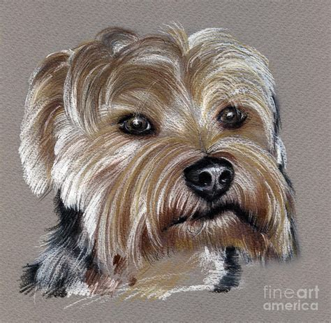 how to draw a yorkie terrier terrier drawing drawing by daliana pacuraru