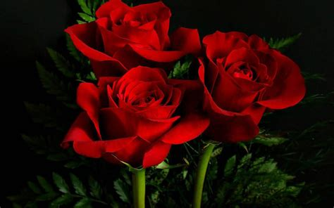 wallpaper 3d rose 3d rose live wallpaper android apps on google play