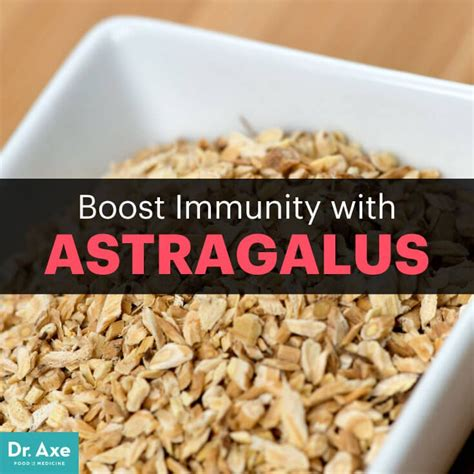 Astragalus Root Detox by Related Keywords Suggestions For Astragalus Benefits
