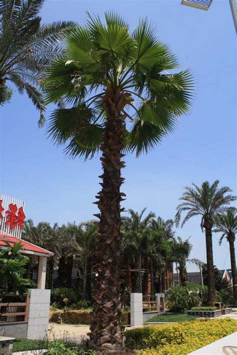 artificial palm trees outdoor pictures reference