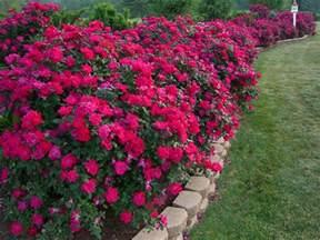 les jardins aux plates bandes fleuries