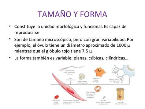 imagenes sensoriales de forma y tamaño estructura celular 1