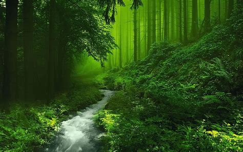 beautiful forest hd image  hd wallpaper hq pictures