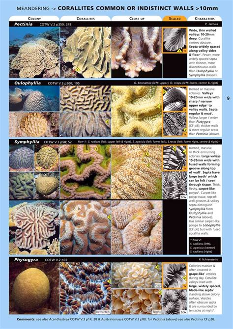 coral reefs maldives reef id books books coral finder underwater identification guide works well