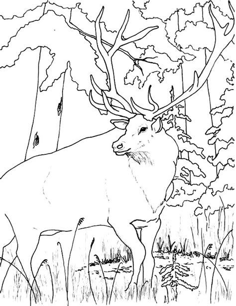 wildlife coloring pages coloring pages for free part 15