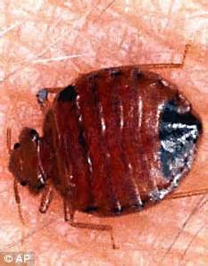 what are bed bugs attracted to return of the bedbug hotels across britain report rise in