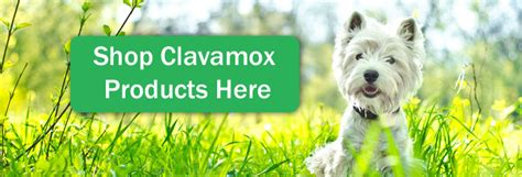 clavamox dosage for dogs clavamox for dogs side effects
