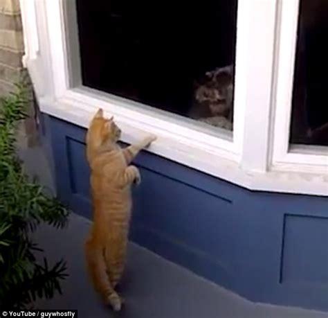 cat rage room cat trolls yapping schnauzer by peeking through window