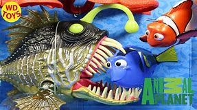 Image result for Animal Planet fish