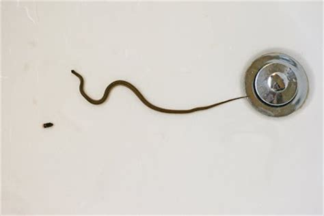 how do i snake a bathtub drain snaking a bathtub drain 171 bathroom design