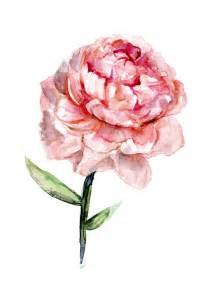 187 custom order of a peony rose watercolor painting