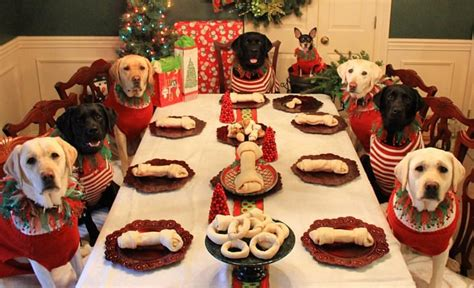 imagenes feliz navidad con perros hermosos una familia decidi 243 hacer adorables postales
