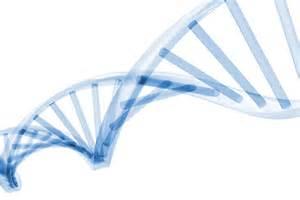 ampigene pcr amp qpcr solutions enzo life sciences