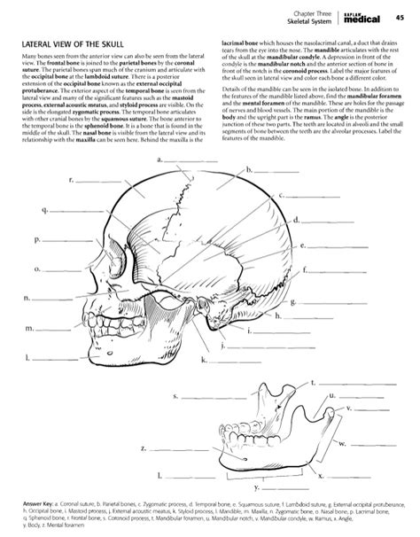 anatomy and physiology coloring book answer key chapter 3 82 anatomy coloring book pdf skeletal system kaplan