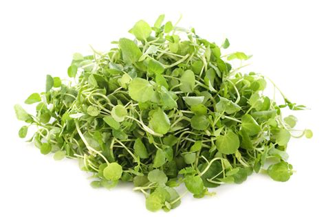 Re discovering Perennial Vegetables Watercress ? Inhabitat
