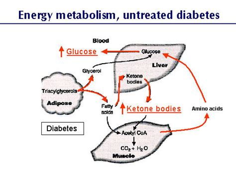 diabetic ketoacidosis in dogs ketoacidosis canine diabetes wiki