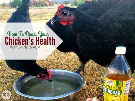feeding garlic acv   chickens