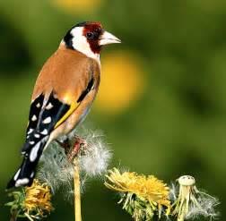 garten vogel garden birds pictures animal