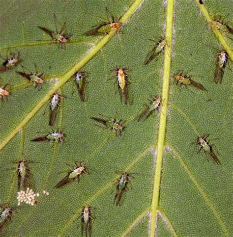 Ameisenplage Im Garten Bek Mpfen 2797 by Pflanzen Gegen Ameisen Garten N Tzlinge Mit Bl