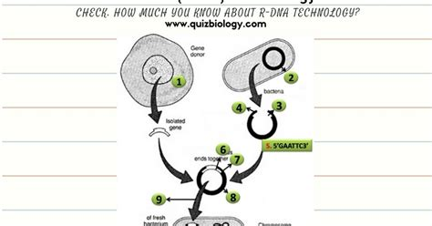 Dna Technology Worksheet by Recombinant Dna Technology Worksheet Biology Exams 4 U