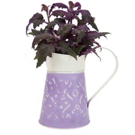 Vacuum Food By Angely Shop plants 4 5 quot purple walmart