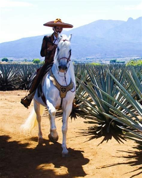 404 Best Charro Images On Pinterest Mexico Viva Mexico