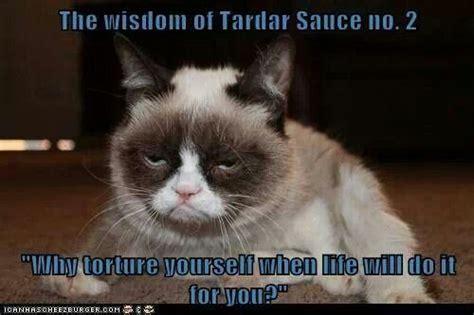 Tardar Sauce Meme - the wisdom of tardar sauce no 2 grumpy cat pinterest