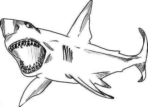 cool coloring pages of sharks shark coloring page how to draw sharks coloring pages