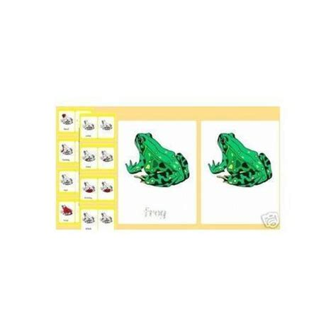 parts of an amphibian three part cards frog tpt