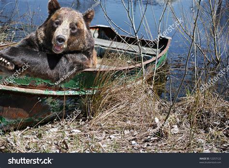 bear boat bear in old row boat stock photo 12257122 shutterstock