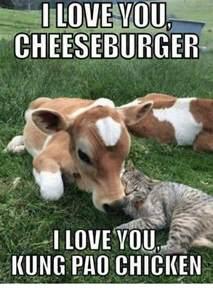 Cheeseburger Meme - i love youl cheeseburger i love you kung pao chicken