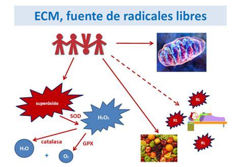 imagenes de radicales libres y antioxidantes estr 233 s oxidativo en las enfermedades metab 243 licas