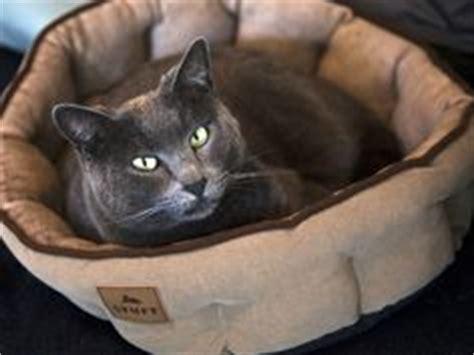 stuft pet bedding 1000 images about stuft pet beds on pinterest cat beds