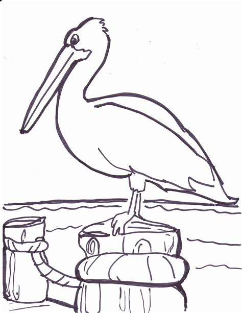 Pelican Coloring Pages