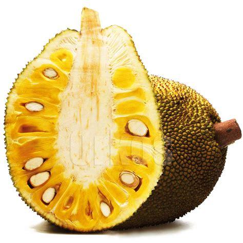 imagenes de jackfruit jackfruit