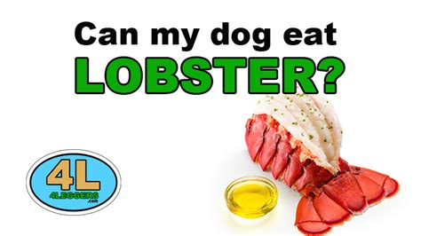 can dogs eat lobster can my eat lobster 4leggers