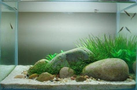 17 best images about aquascaping on hobbit