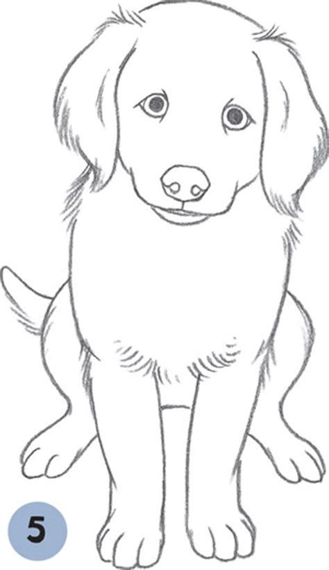 how to draw a golden retriever how to draw a golden retriever sitting www pixshark images galleries with a bite