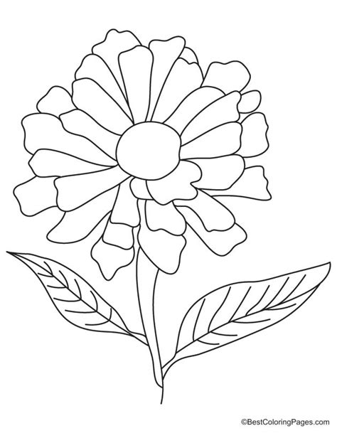 Coloring Page Zinnia by Yellow Zinnia Coloring Page Free Yellow Zinnia