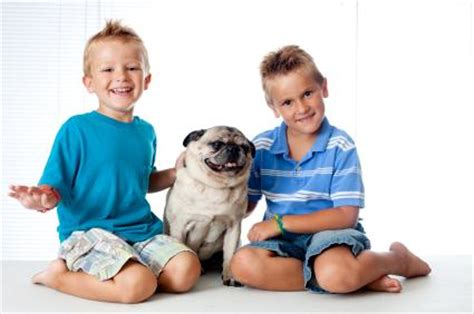 pugs and children pugs and
