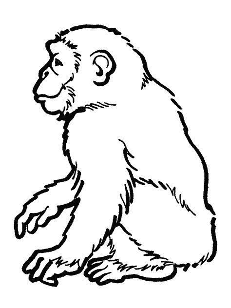 Outline Drawing Orangutan by Monkey Outline Clipartion