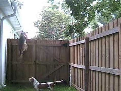 how to keep dog from jumping fence my dog keeps escaping under the fence stop barking puppy