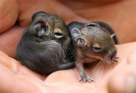 Pin by So Fresh on Animal Love  Kittys   Pinterest