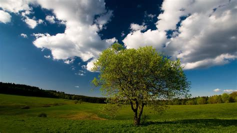 wallpaper hd 1920x1080 tree summer broad grassland and tree wallpaper widescreen and