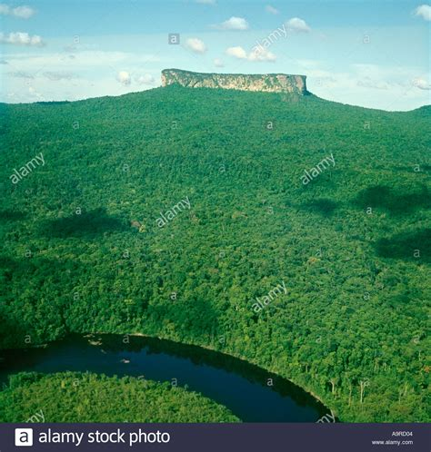 view of forest habitat royalty free stock photograph in rainforest aerial view wallpaper